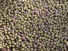 Free Mung Beans Royalty Free Stock Photography - 1274427