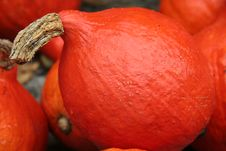 Free Pumpkin Royalty Free Stock Image - 1275466