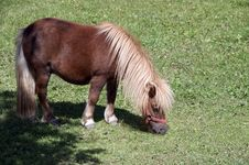 Free Grazing Pony 2006 Royalty Free Stock Images - 1275659