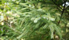 Free Tree Royalty Free Stock Photos - 1276808