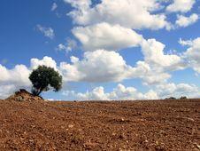 Free Solitary Tree I Stock Image - 1277951