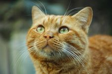 Free Selective Focus Photography Orange Tabby Cat Looking Up Royalty Free Stock Photo - 127081635