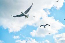 Free Several Soaring Seagulls Stock Photo - 127259980