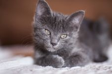 Free Close-up Photography Of Gray Kitten Stock Photo - 127260160