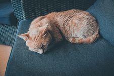 Free Orange Cat Lying On Chair Royalty Free Stock Photos - 127260298