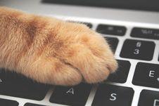 Free Orange Cat Foot On Laptop Keyboard Stock Images - 127260304