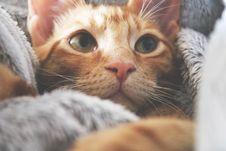 Free Orange Kitten Royalty Free Stock Image - 127260306
