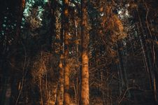 Free Photo Of Forest During Sunset Royalty Free Stock Image - 127260356