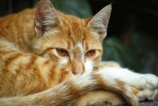 Free Closeup Photo Of Orange Tabby Cat Stock Photos - 127260373