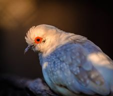 Free Selective Focus Photo Of Diamond Dove Royalty Free Stock Images - 127260519