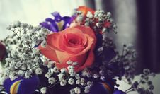 Free Close-Up Photo Of Rose Royalty Free Stock Photography - 127260557