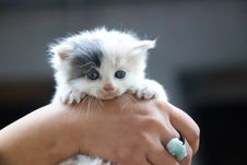 Free Close-Up Photo Of Person Holding White Kitten Royalty Free Stock Image - 127260576