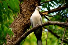 Free White And Grey Bird Perched On Tree Stock Photography - 127260622