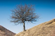 Free Lonely Tree Stock Photos - 12731873
