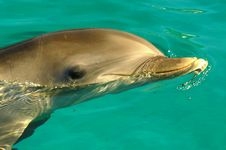 Free Dolphin Stock Photo - 12736260