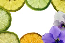 Free Citrus Card Collage Stock Images - 12738584