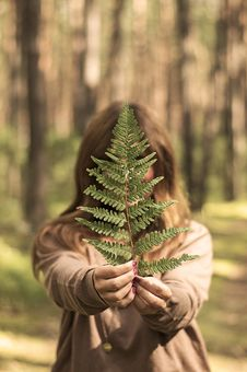 Free Selective Focus Photography Of Woman Holding Leaf In Forest Stock Image - 127449891