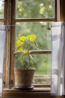 Free Green Leafed Plant Beside Window Royalty Free Stock Photo - 127449895