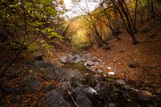 Free Stream Passing Through A Forest Stock Images - 127449924