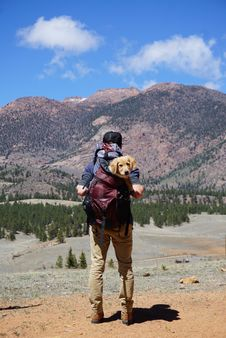 Free Person Carrying Red Backpack With Yellow Labrador Retriever Puppy Walking To The Forest Stock Image - 127449971