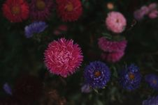 Free Pink, Purple, And White Petaled Flowers In Bloom Royalty Free Stock Photo - 127449995