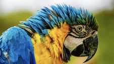Free Close-up Photography Of Blue And Yellow Macaw Stock Photography - 127494242