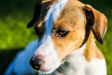 Free Close-up Photography Of Brown And White Dog Stock Photography - 127552222