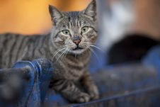 Free Selective Focus Photography Gray Tabby Cat Lying On Blue Metal Pipe Royalty Free Stock Photo - 127649615