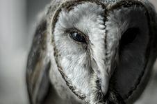 Free Close-Up Photo Of Owl Stock Image - 127650301