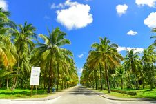 Free Gray Concrete Road Between Palm Trees Royalty Free Stock Photos - 127767188