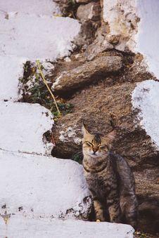 Free Cat On Snowy Field Stock Photo - 127767350