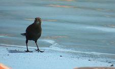 Free Bird, Beak, Shore, Fauna Stock Image - 127904801