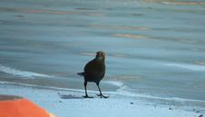 Free Bird, Beak, Shore, Fauna Stock Photos - 127904843