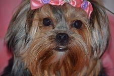 Free Dog, Dog Like Mammal, Dog Breed, Vertebrate Royalty Free Stock Photography - 127904977