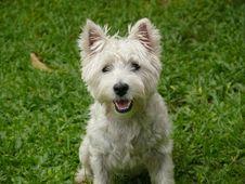 Free Dog, Dog Like Mammal, Dog Breed, Terrier Royalty Free Stock Photo - 127904985