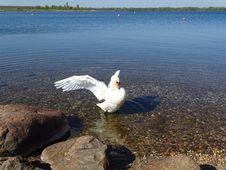 Free Bird, Water Bird, Water, Fauna Stock Image - 127905111