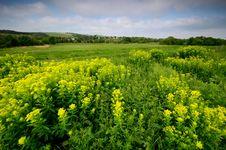 Free Vegetation, Ecosystem, Mustard Plant, Rapeseed Royalty Free Stock Image - 127905206