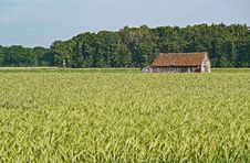 Free Field, Crop, Agriculture, Farm Royalty Free Stock Photography - 127905277