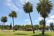 Free Tree, Palm Tree, Sky, Arecales Royalty Free Stock Image - 127905346