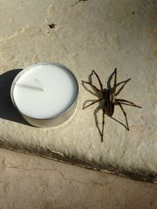 Free Spider, Arachnid, Invertebrate, Arthropod Royalty Free Stock Photography - 127905497