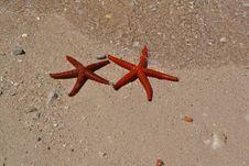 Free Starfish, Invertebrate, Marine Invertebrates, Echinoderm Stock Photo - 127905530