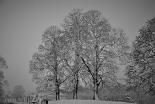 Free Tree, Winter, Black And White, Black Stock Images - 127905654