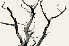 Free Dead Tree Royalty Free Stock Photography - 127946177