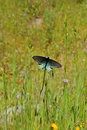 Free Butterfly In A Meadow Royalty Free Stock Images - 1284639