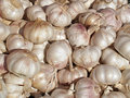 Free Pile Of Garlic Royalty Free Stock Image - 1285036