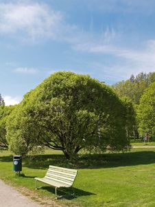 Free Bench And A Tree Royalty Free Stock Photo - 1280305
