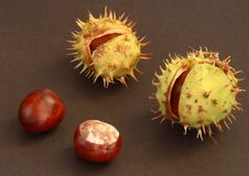 Free Conkers On The Black Background Stock Image - 1280541