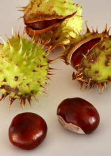 Free Conkers Going To Open Royalty Free Stock Photos - 1280568