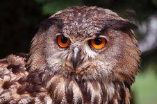 Free Head Owl Stock Image - 1280621