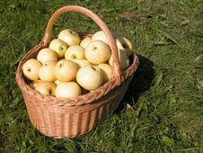 Free Basket Of Apples Stock Images - 1282164